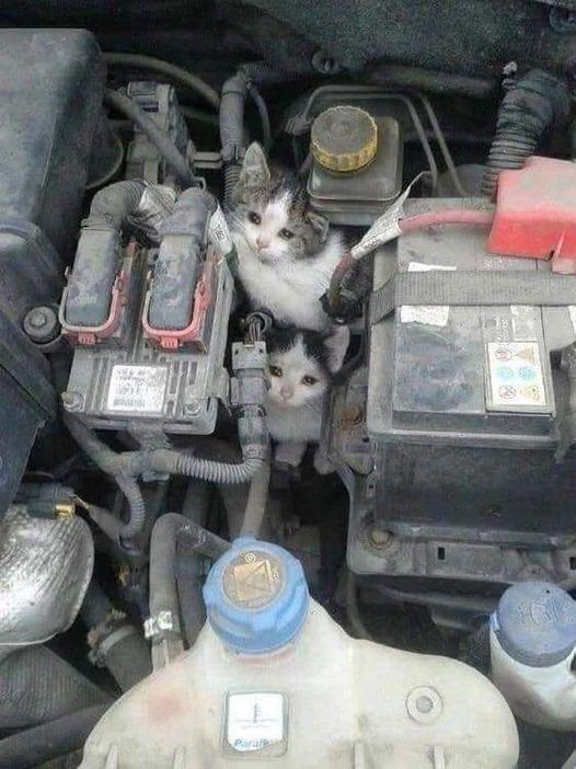 Zdjęcie przedstawia dwa małe kotki, które utknęły podmaską samochodu.